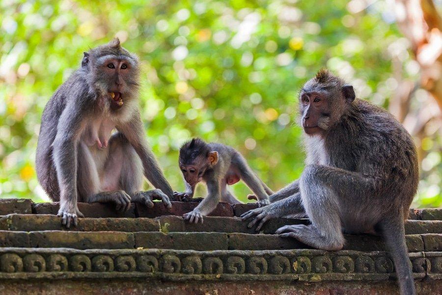 Moneky Forest, Ubud, Bali, Indonesia