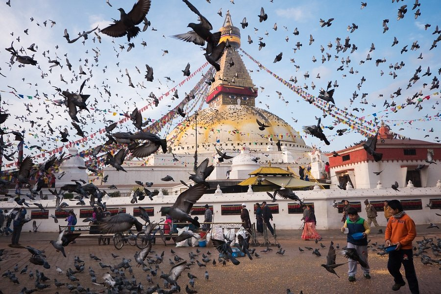 Pigeons fly all over Boudhanath Stupa . Boudhanath is one of the largest ancient buddhist stupa in the world