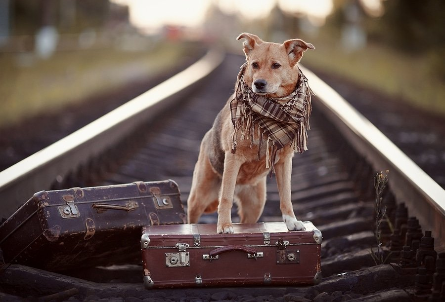 Traveling With Your Dog: Helpful Hints For Your Canine Companion's Comfort