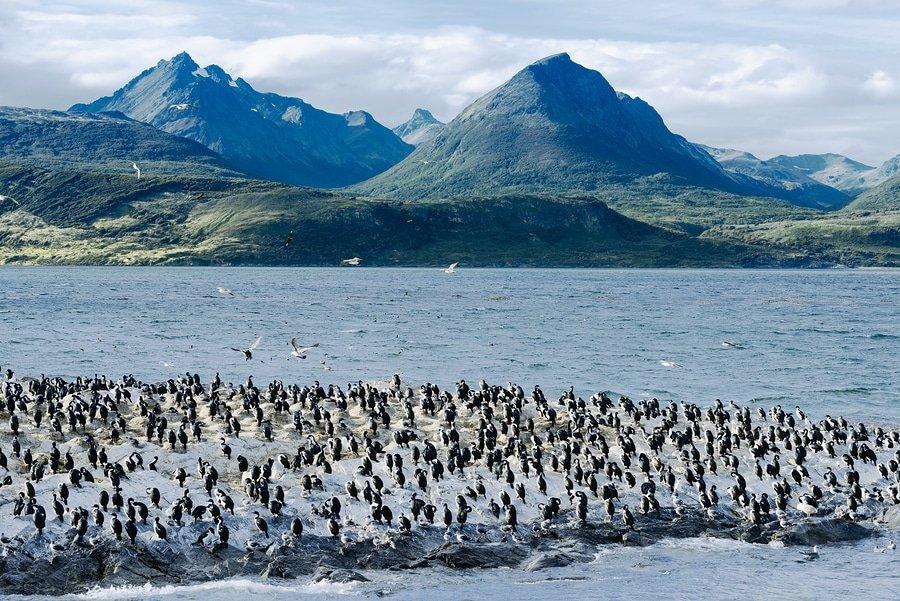 Beagle Channel, Tierra Del Fuego, Argentina