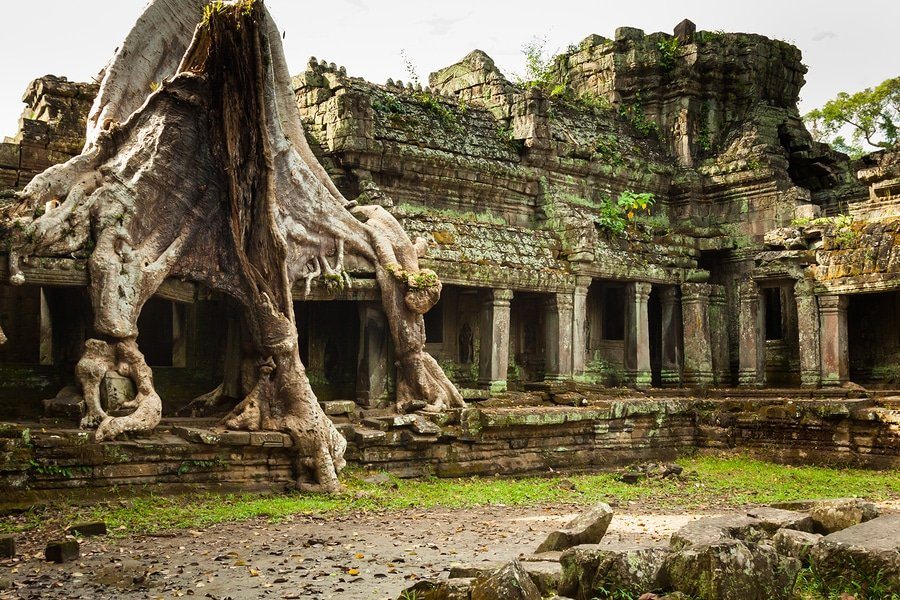 Tree root overgrowing parts of ancient Preah Khan Temple at Angkor Wat Area in Cambodia