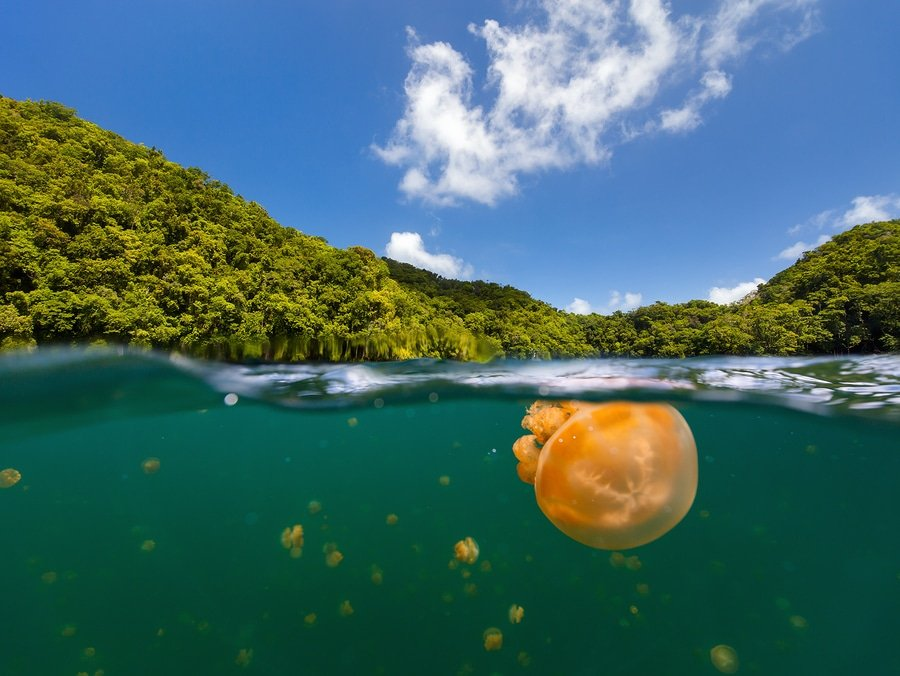 Jellyfish lake , Palau
