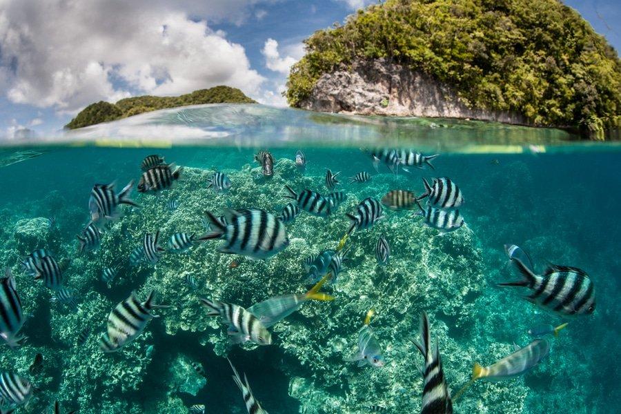 Reefs, Palau