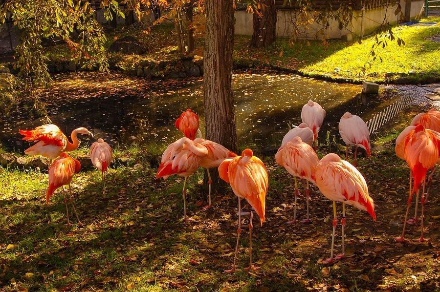 Flaimingos, Asahiyama Zoo, Hokkaido, Japan
