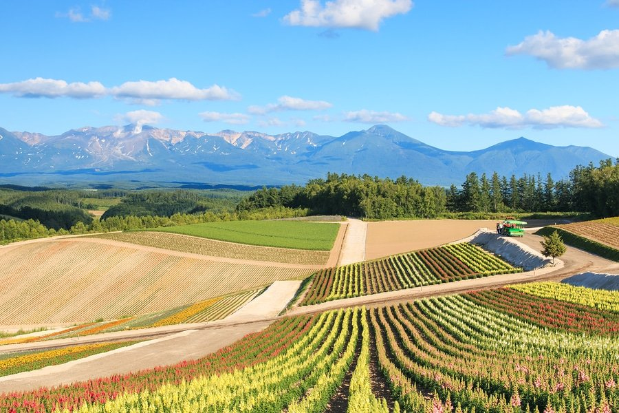 A flower garden with a lovely mountain view in Kamifurano