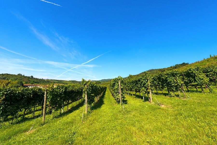 Vineyards in Valpolicella