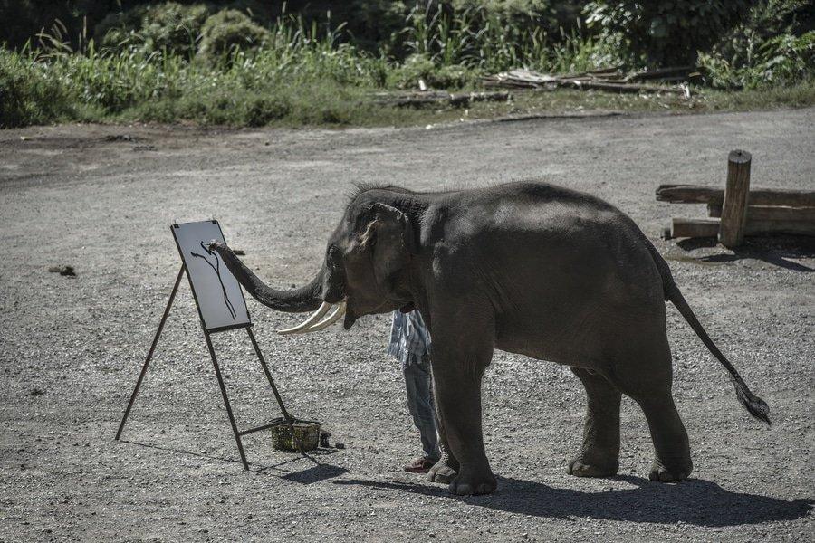 Elephant nature park near Chiang Mai, Thailand