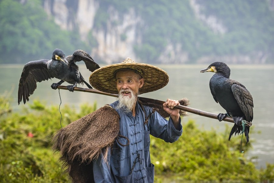 Cormorant fishing, Li River, Yangshuo, China