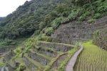 Banaue Rice Terraces, Northern Philippines