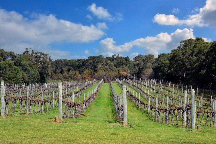 Vineyards, Margaret River, Western Australia