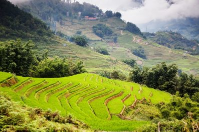 rice fields, Sapa, Vietnam
