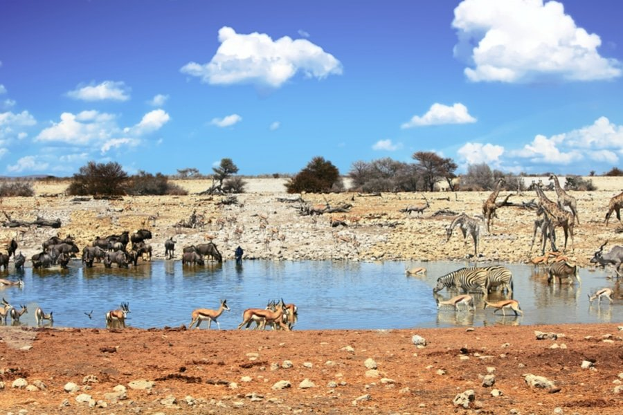 animals at a waterhole, Etosha national park, Namibia