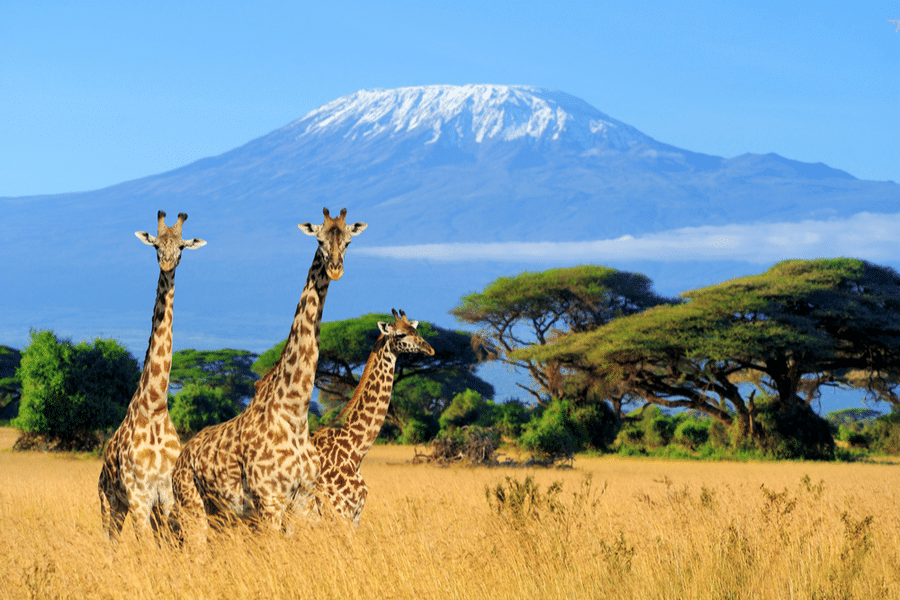 10 days in Kenya for beginners