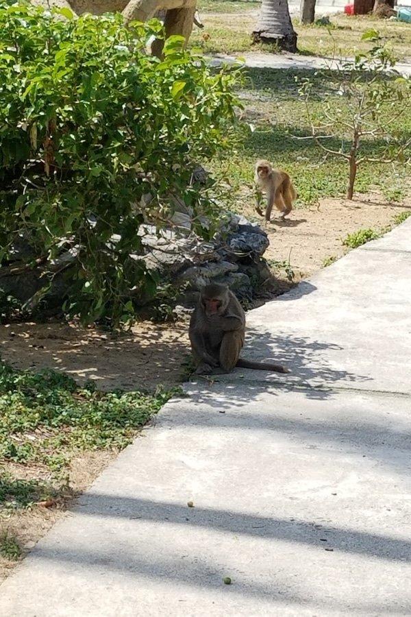 Monkey Island, Nha Trang, Vietnam