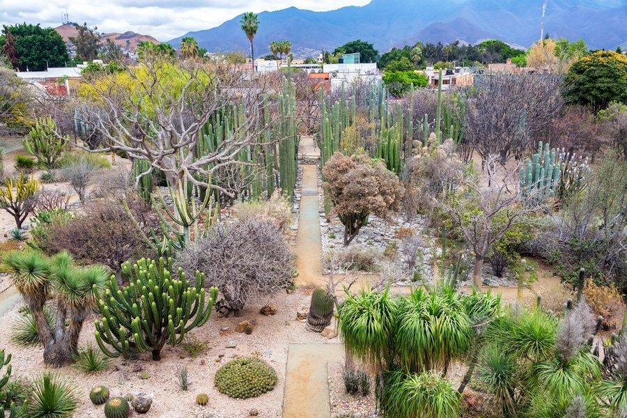 Jardín Etnobotánico de Oaxaca, Oaxaca, Mexico