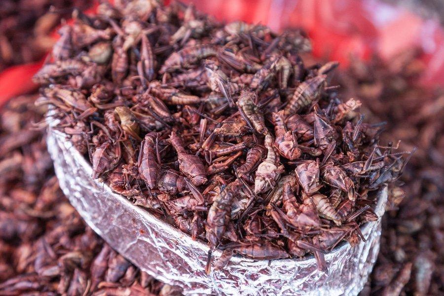 grasshopper snack, Mercado Benito Juárez, Oaxaca, Mexico