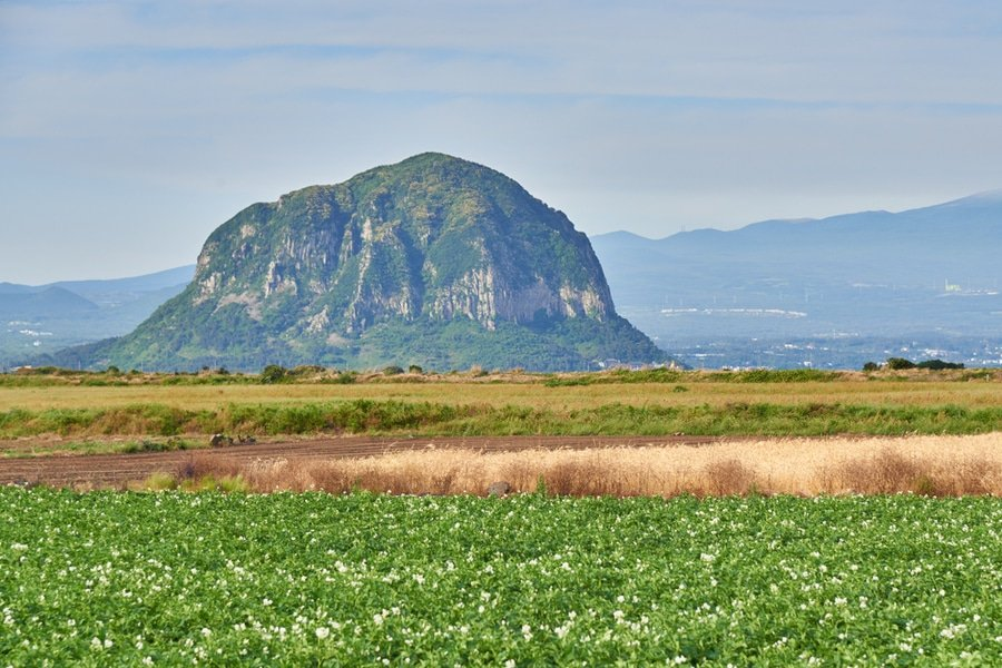 potato farm field with Mt. Sanbangsan and Mt. Hallasan in Daejeongeup, Jeju Island, South Korea