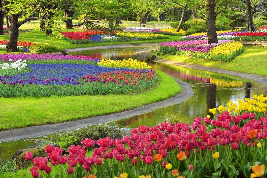 Showa Memorial Park, Tokyo, Japan