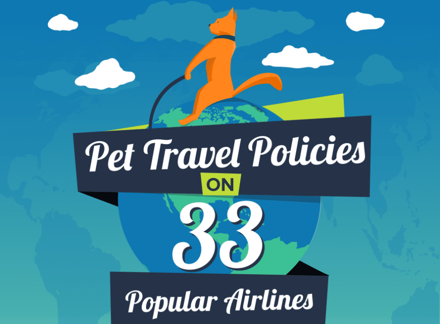Airline Policies To Consider Before Flying With Your Pet
